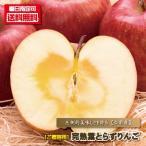 りんご ご贈答用 津軽の完熟葉とらずりんご 10kg箱(28個-40個) 送料無料 リンゴ 林檎 ふじ フジ