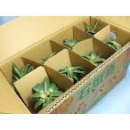 パイナップル ハワイ種8玉箱入(1玉1kg以上)沖縄八重山産 JAおきなわ:沖縄