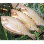 鰈魚 - 国産 福井県産 一夜干しかれい 3尾入り Mサイズ 送料無料 一夜干し 鰈(カレイ) 一夜干しカレイ