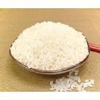 無洗米 2kg コシヒカリ 福井県産 無洗米 こしひかり 2キロ×1 お米 無洗米 コシヒカリ 2kg 福井産 コシヒカリ R1年産 新米