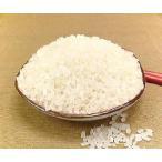 無洗米 5kg コシヒカリ 福井県産 無洗米 こしひかり 5キロ×1 お米 無洗米 コシヒカリ 5kg 福井産 コシヒカリ R1年産 新米