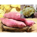 富紅娘 薩摩芋 通販 2.5kg入 福井県で 鹿児島産 さつまいも 紅はるか 品種 苗の栽培品 サツマイモ さつま芋 べにはるか ベニハルカ 焼き芋 レシピ付