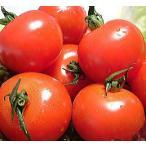 福井県産 ブランド とまと 越のルビー 高級ブランドトマト 生トマト 約2.7kg入 高栄養 高糖度のミディトマト 越のルビ 福井産