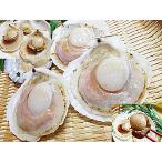 ホタテ ほたて貝 片貝 付き 40枚入 ほたて片貝 ホタテのバター焼き に 帆立 貝 ほたて 冷凍 品 帆立貝 殻付き ホタテ貝 要 加熱調理 ホタテ 殻付き