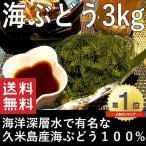 業務用 海ぶどう 沖縄 お土産 久米島産海ぶどう3kg(500g×6パック)   海洋深層水で有名な久米島産海ぶどう100% おすすめ