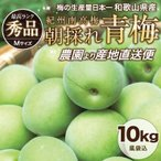 ショッピング梅 青梅 南高青梅 Mサイズ 梅酒用 朝採れ青梅 10.0kg 送料無料 うめ ウメ
