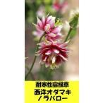 耐寒性宿根草 西洋オダマキ ノラバロー【アキレギア】