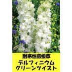 耐寒性宿根草 デルフィニウム グリーンツイスト【デルフィニューム】