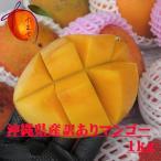 訳あり 沖縄県産完熟 マンゴー 約1kg(2〜3個)☆送料無料☆ 発送6月中旬〜8月上旬