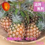 沖縄県産 ピーチパイン(パイナップル) 約10kg  【発送3月下旬〜6月】 【送料無料】