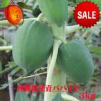 沖縄県産青パパイヤ約3kg  【発送年中ですがお待たせする場合有】 青パパイヤは栄養価が高く健康維持に大切な酵素を豊富に含んでいます。