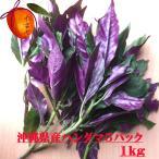 【送料無料】【2000円ぽっきり】 【島野菜】 葉表が緑、葉裏が紫のツートンカラーが特徴  沖...