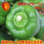 沖縄県産 ビッグピーマン5kg  【発送11〜6月】 【送料無料】肉厚柔らかいつやつやピーマン  トマトの約5倍のビタミンCが含まれてます!