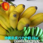 【発送8〜10月】【送料無料】新しい沖縄のバナナ【ゴールデンスウィート】約5kg前後