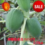 木瓜 - 沖縄県産青パパイヤ約10kg  【夏季はチルド便でお届け致します。】 青パパイヤは栄養価が高く健康維持に大切な酵素を豊富に含んでいます。