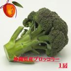 沖縄県産野菜  ブロッコリー 1個(約300g) 【発送 12〜4月】