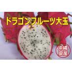 沖縄県産ドラゴンフルーツ(白) 大玉 1個(500g以上)【発送7〜12月】