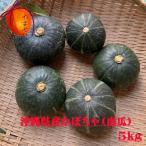 【発送12〜6月】沖縄県宮古島産・かぼちゃ 約1kg前後(1〜2個)【減農薬有機肥料栽培】