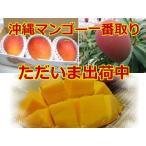 予約開始【優品】沖縄県豊見城産完熟アップルマンゴー 1.5kg(3〜5玉入り) 【発送7月上旬〜8月中旬】
