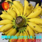 沖縄県産島バナナ丸ごと一本−二本(5〜6kg)【発送7〜11月】