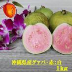 【発送7月下旬〜9月】 沖縄県産 グァバ 約1kg   赤・白どちらになるかはお任せになります。