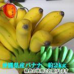 【送料無料】沖縄県産バナナ「ゴールデンスイートバナナ」約2kg【発送5月〜1月】
