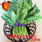 安心・フレッシュ沖縄県産野菜  ほうれん草 約500g 【発送 11〜6月】