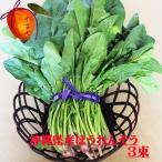元気・安心・フレッシュ沖縄県産野菜  ほうれん草 3束(約500g) 【発送 11〜6月】