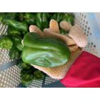 自社農園産 ビッグピーマン 5kg  【発送11〜6月】肉厚柔らかいつやつやピーマン  トマトの約5倍のビタミンCが含まれてます!
