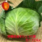 沖縄県産野菜  キャベツ 1箱 8〜10kg(5〜10個)【発送時期11月中旬〜6月】 安心・フレッシュ