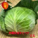 沖縄県産野菜  キャベツ 3個(@1kg以上)【発送時期11月中旬〜6月】 安心・フレッシュ