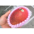 ハウス加温栽培 沖縄県産完熟マンゴー1個(350〜400g)送料無料 発送6月中旬〜7月上旬