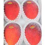 最高級 宮古島産完熟マンゴー(約2kg) 【送料無料】【自社農園生産】 【発送7月上旬〜8月上旬】