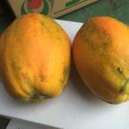 【送料無料】沖縄県産 完熟フルーツパパイヤ約2kg 数量限定!【品種お任せ】