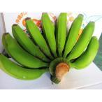 Banana - 【発送7〜10月】沖縄の三尺バナナ約 5kg