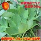 サクナ(長命草)