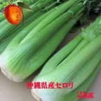 沖縄県産野菜  セロリ 約2kg 【発送 12〜4月】