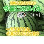 今帰仁スイカ 1個(3~4kg)