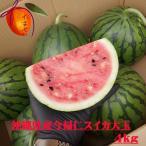 今帰仁スイカ 大玉 1個 約4kg以上【発送11月〜7月】 【今帰仁すいか】