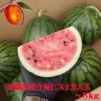 今帰仁スイカ 大玉 1個 約4kg以上【発送1月〜7月】贈答用に大好評
