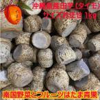 沖縄県産   タイモ(ターム、田芋)1kg 【発送 年中ですがお待たせするとき有】 安心・フレッシュ