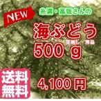 ☆送料無料☆久米島産・糸満の高坂さんの採れたて【生】海ぶどう(茎なし秀品)500g ※他商品と同梱不可