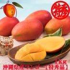 秀品 沖縄県産完熟アップルマンゴー1kg(大玉2〜3玉) 発送6月中旬〜8月中旬