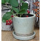 ガーデンポット 鉢 テラコッタ ガーデン雑貨