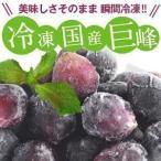 [冷凍フルーツ] 国産巨峰500g20個まで1配送でお届けクール便 [冷凍] にてお届け 【2〜3営業日以内に出荷】