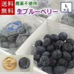 大粒の生ブルーベリー(Lサイズ大玉)/岩手県遠野産、農薬不使用