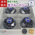 大粒の生ブルーベリー(2Lサイズ)/岩手県遠野産、農薬不使用