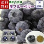 超大粒の生ブルーベリー(3Lサイズ超特大)/岩手県遠野産、農薬不使用