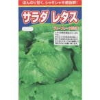 レタス(グリーンレーク2B61)