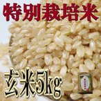 特別栽培 8割有機米    殺菌殺虫剤不使用 玄米 ひのひかり 5kg 奈良県産 令和元年産 ヒノヒカリ みどりちゃんちのお米
